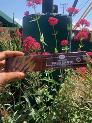 Palo Santo Incense